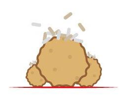 Mr. Hot-Wok Gerichte Hühnerfleischbällchen mit Reis